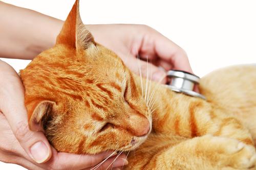 Você sabe como tratar um gato com nariz entupido?